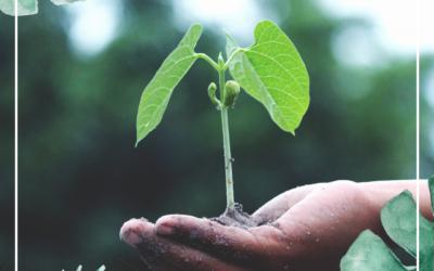 La semplicità come efficace strategia di crescita